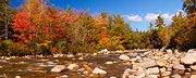 Swift River Fall Colours
