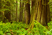 Cathedral Grove I